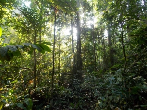 Rainforest Jungle Borneo Active Outdoor Discovery Primary Geography Resources KS1 KS2