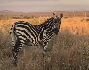 Africa Tanzania Active Outdoor Discovery Primary Geography Resources KS1 KS2